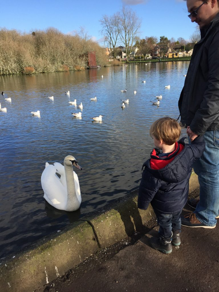 Ducks - 4 free things to do with toddlers in Cork